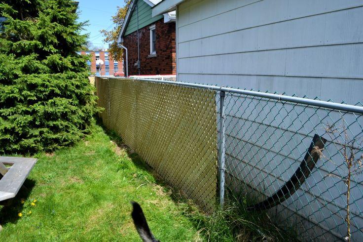 chain link lattice Backyard privacy, Yard privacy, Chain