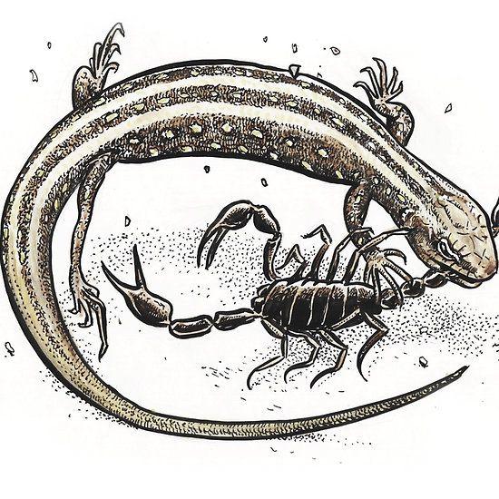 Lizard V Scorpion
