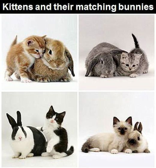 Kittens And Matching Bunnies Pictures, Photos, and Images for Facebook, Tumblr, Pinterest, and Twitter