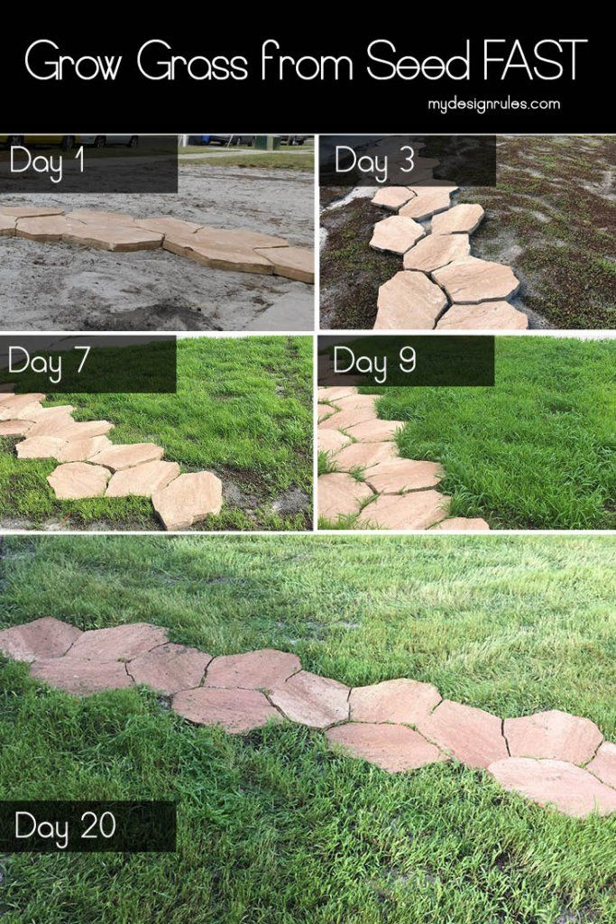 Do You Have A Lawn Full Of Weeds This Can Help Growing Grass