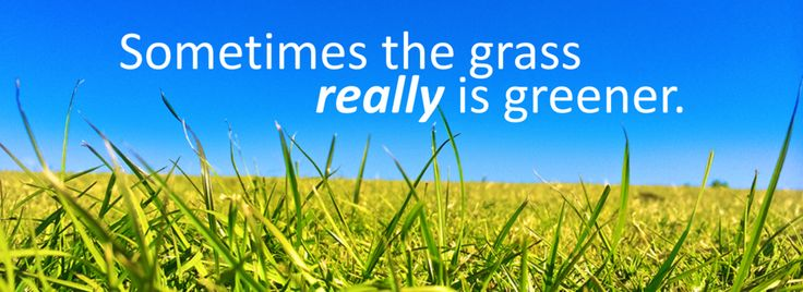 Sometimes the grass really is greener