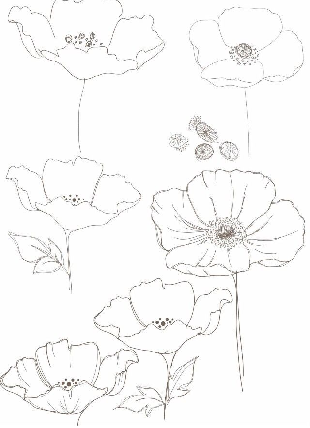 De 25 bedste id er inden for poppy drawing p pinterest for Poppy drawing step by step
