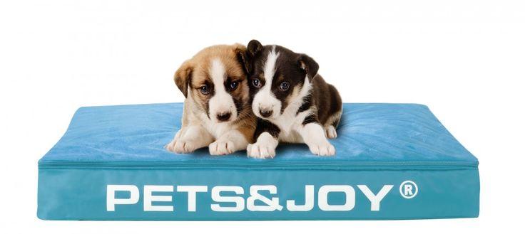 Dog Bed Large ‹ Sit&Joy ®   The &Joy Company. www.isopearls.be/zitzakken