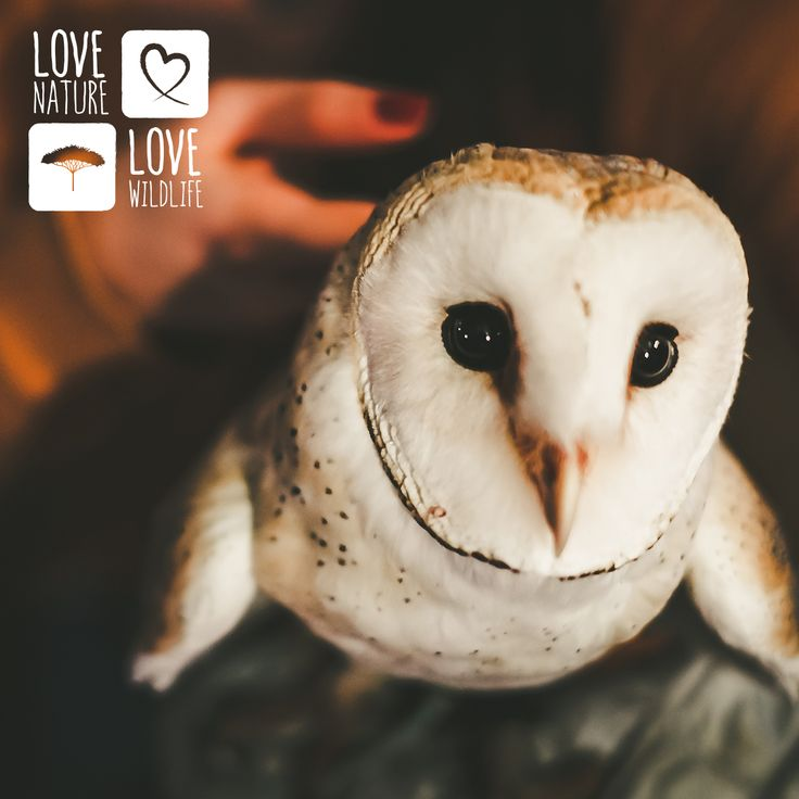 On now // ALL MONTH: Show nature & wildlife ♥ by buying from us (so we can support charities that help them). 15% OFF our entire site w/ promo code LOVE #ValentinesDay
