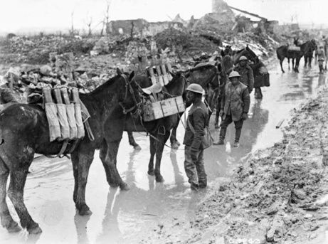 """Pack horses were used to carry ammunition in World War One. According to my godfather Colin Greener, who served in the Royal Canadian Dragoons: """"The trouble with pack horses was that they would stay behind, and they wouldn't jump with you."""""""