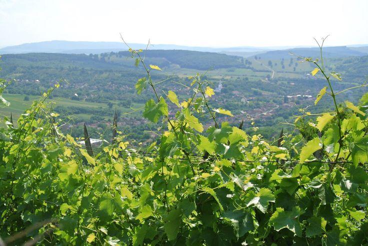 Széles Béla & Rudolf    #wine #tour #winesylvania