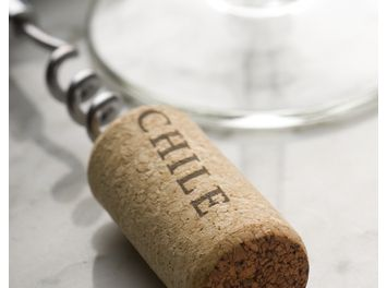 Chilean Wine - A Guide to the Wines of Chile