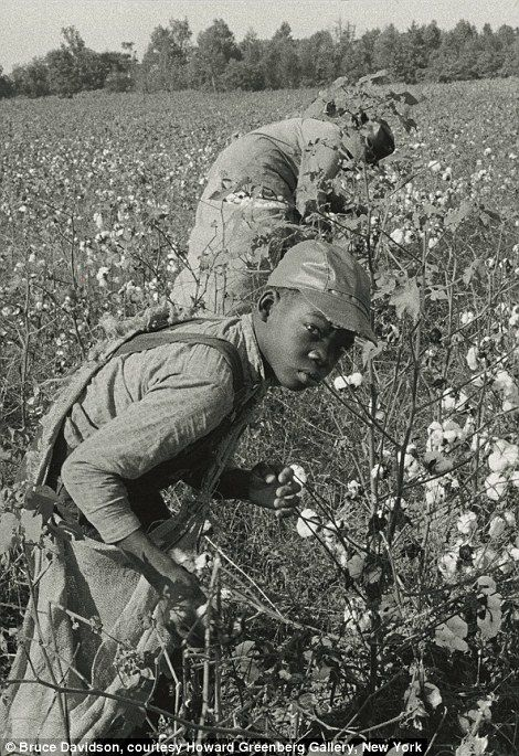 boys picking cotton in a field (davidson)