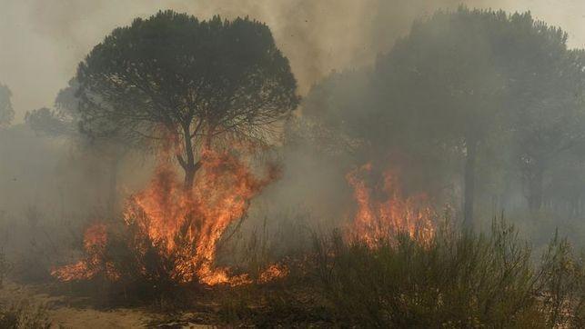 El incendio de Doñana fue por negligencia de una carbonería
