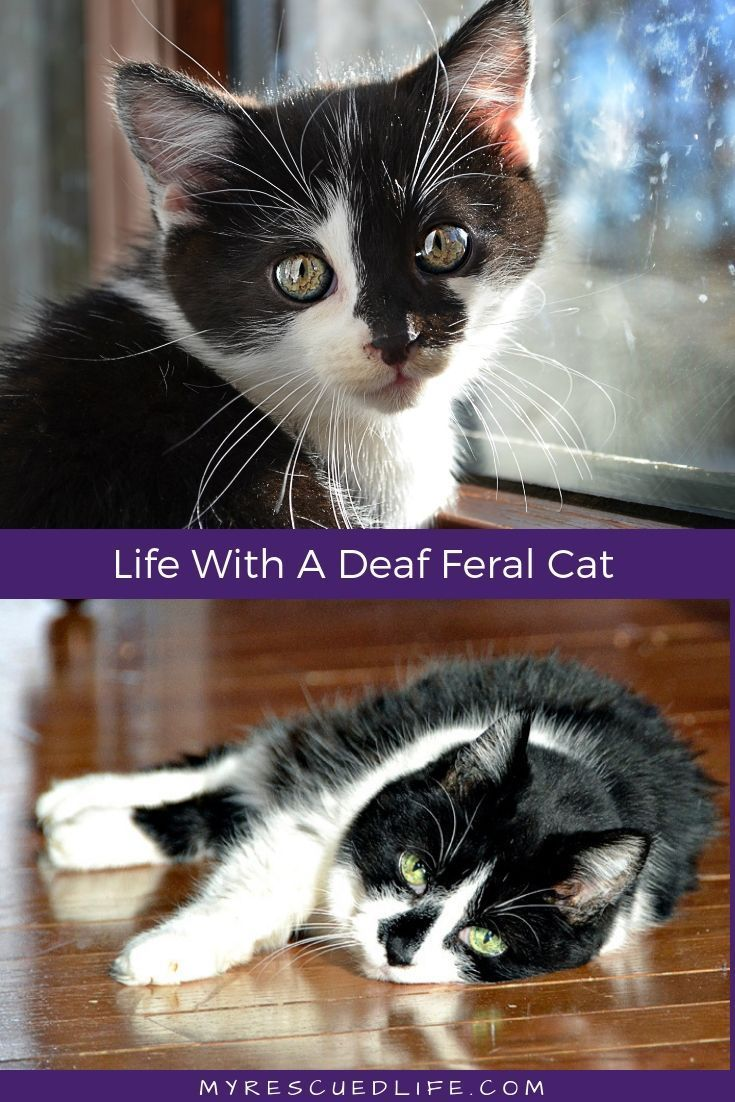 Life Isn T Supposed To Be Perfect Or Easy And That S What Makes It So Amazing Find Out How We Learned To Appreciate And Celebrate The Feral Cats Cats Sick Cat