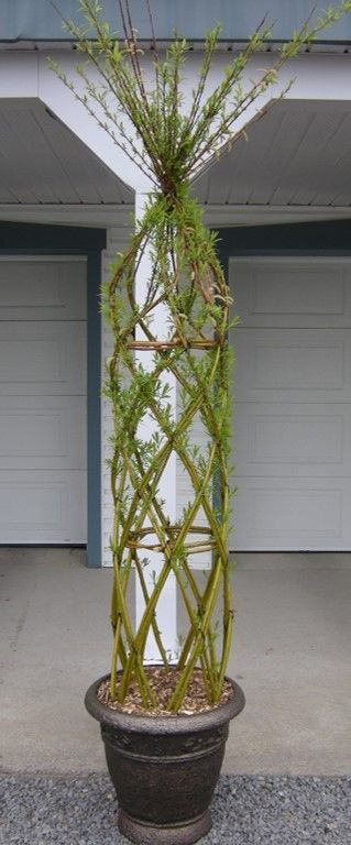 Willow structure. beautiful in urban backyard #TheGreenBarrier #structure #willow