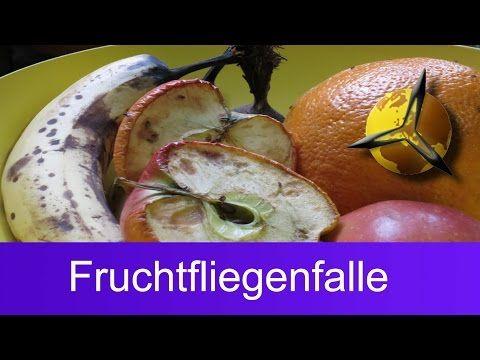 25+ beste ideeën over Obstfliegen op Pinterest - Obstfliegen - hausmittel gegen ameisen in der küche