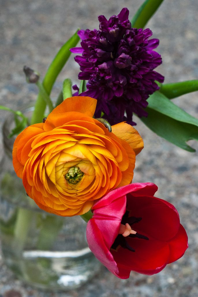 A favorite studio item--flowers  Photo credit: Jude Griffin