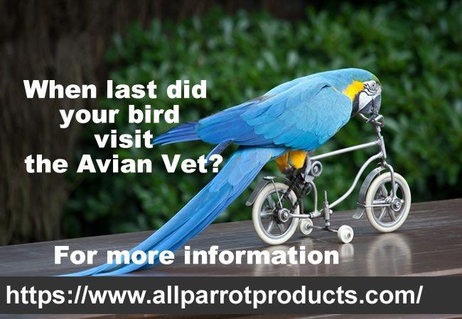Vital For All Pet Owners When Last Did Your Bird Visit The Avian Vet Parrot Bird Supplies Bird