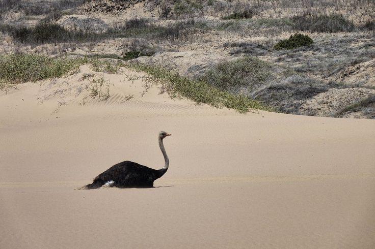 Una giornata tra le dune del deserto di Sandwich Harbour e Walvis Bay, la costa delle Namibia in 4x4.
