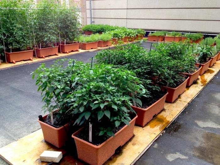 71 best rooftop patio/garden images on pinterest   rooftop gardens ... - Rooftop Patio Ideas