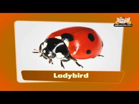 Flashcards for kids - Insects - YouTube/ lists some not insects but nice pics