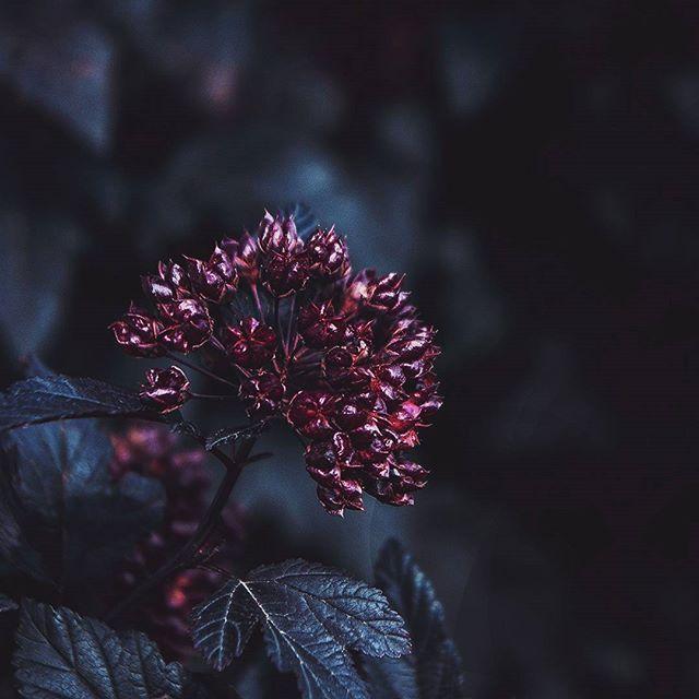 Выброси сигареты купи маме цветы электронная сигарета elfin купить спб