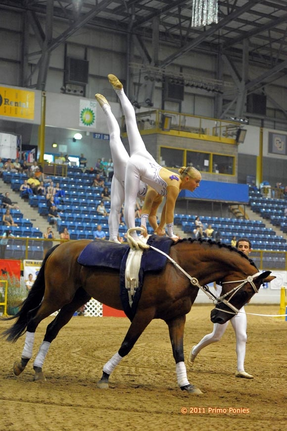 184 Best Equestrian Vaulting Images On Pinterest Horses