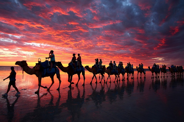 camels of Cable Beach, Broome, Western Australia