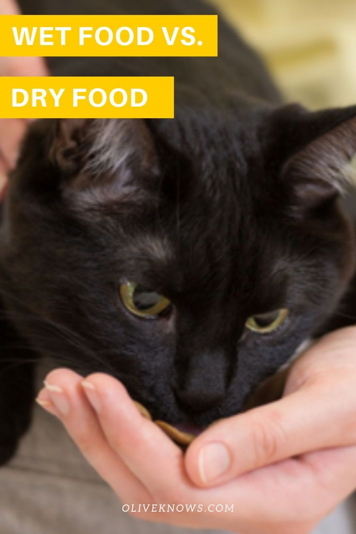 Wet Food Vs Dry Food Cat Behavior Sick Cat Cats