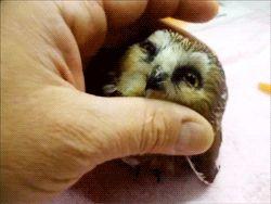 LOOK AT THE BABY OWL. LOOOOKKKK AAAAAAAAATTTTTT IIIIIIIIIIIIIIIIITTTTTTTTTTTTTT