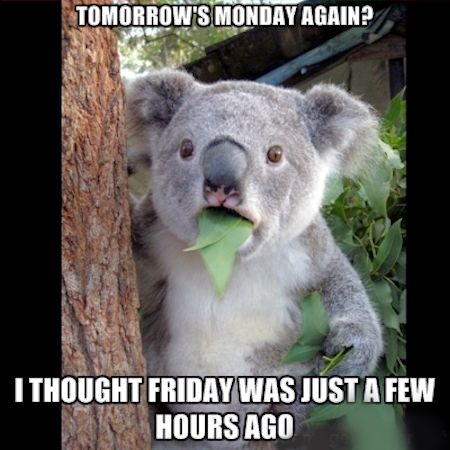 Tomorrowu0027s Monday Again Quotes Quote Funny Quotes Monday Days Of The Week Sunday  Monday Quotes Sunday