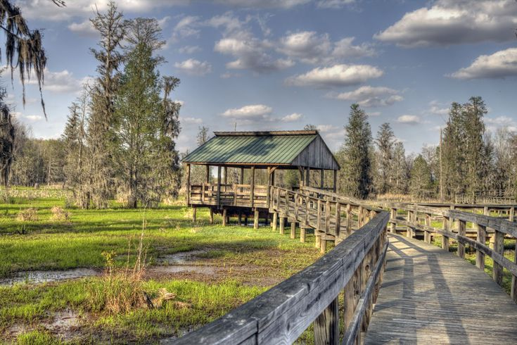 Take a nature walk through the Phinizy Swamp in Augusta and keep your eyes peeled for alligators.