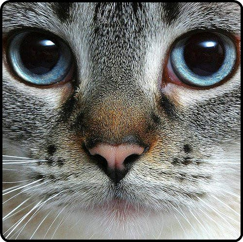 Best Animal Eyes Images On Pinterest Cat Eyes Animal And Angles - 24 detailed close ups of animal eyes