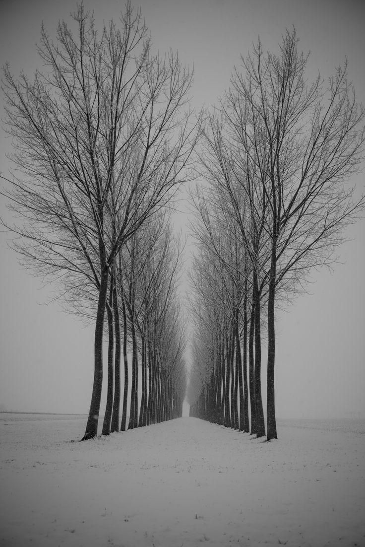 SNOW by Riccardo Alù