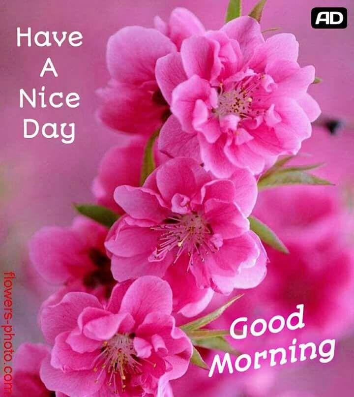 Pin By BHARATI DUTTA On Good Morning