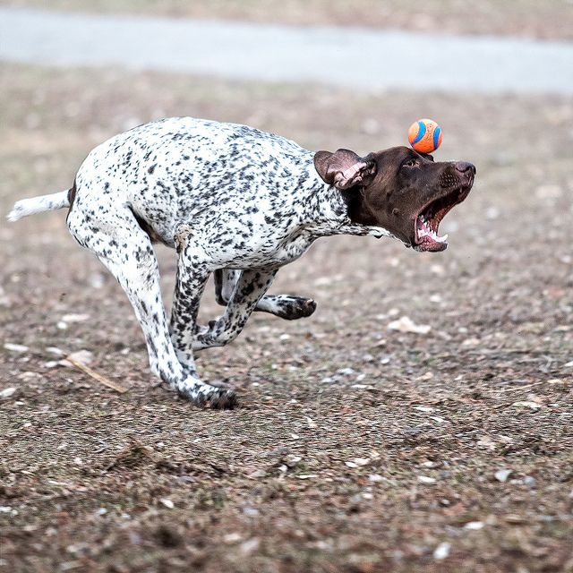 Keep your ball on the eye by dudejager on Flickr.