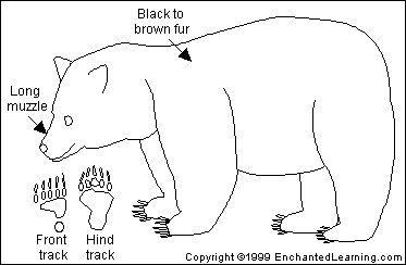 American Black Bear Printout- EnchantedLearning.com