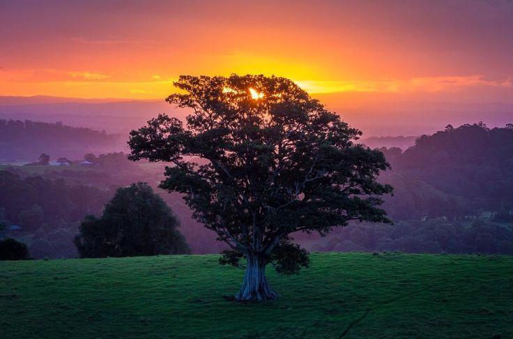 Sunset in Northern NSW Australia [1280x847][OC] #arya #love #instagood #photooftheday #beautiful #happy #cute #picoftheday