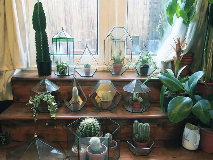 /: Plants Can, Terrarium Art, Glasses Container, Indoor Gardens, House Style, Interiors Plants, Leaded Glasses, Terrarium Ideas, Glasses House