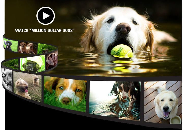 Welcome to the Orvis Cover Dog Photo Contest