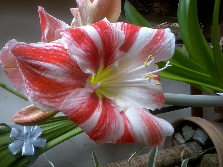 Fiore della mia pianta.