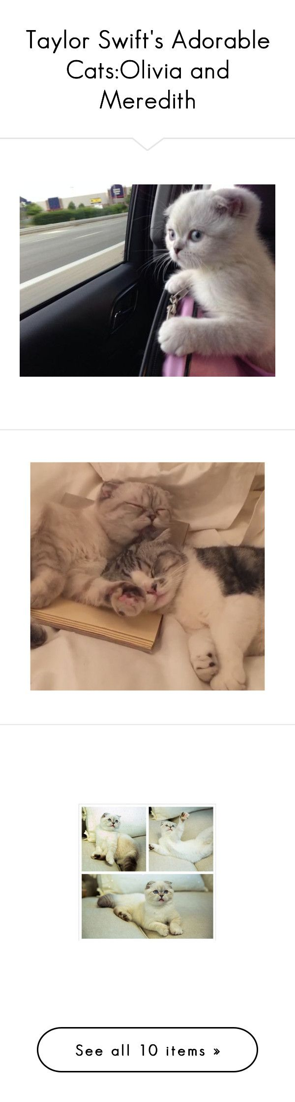 """""""Taylor Swift's Adorable Cats:Olivia and Meredith"""" by fashionsnumber1fan on Polyvore featuring pictures, home, home decor, clocks, kitty cat clock, kitty alarm clock, kitty clock, rooster home decor, rooster alarm clock and cats"""