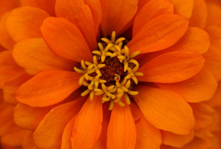 Zinnias flower | 21 Unbelievable Photos Of Symmetry In Nature