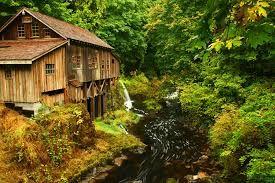 Afbeeldingsresultaat voor autumn forest america