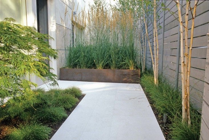 planters grasses - Google Search