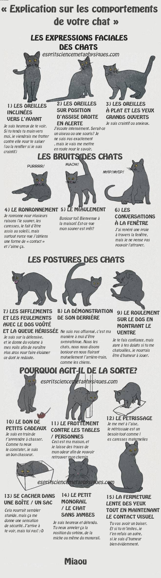 chat-essaie-de-dire                                                                                                                                                                                 Plus