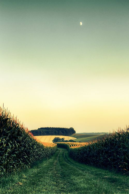 Cornfield In Midwest, Corn Fields, Cornfields, Open Field, Illinois, The Simple Life, Farms Life, Roads, Country