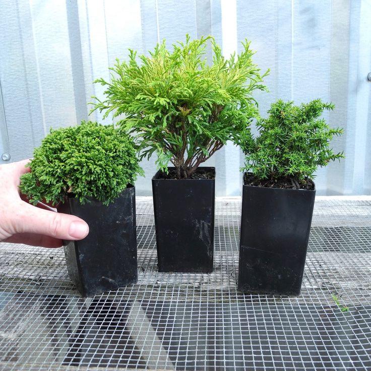 Miniature Garden TINY Tree Set of 3 for Fairy Garden, Pre Bonsai, Railroad…