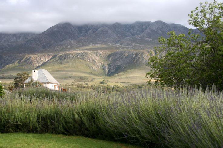 swartberg manor farm