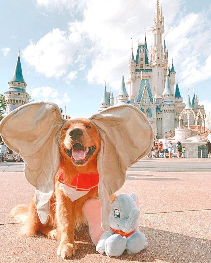 dumbo dog costume | Cute animals, Cute puppy breeds, Cute baby animals