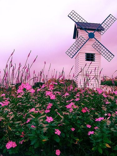 thought about a bit of kitsch in the landscape look at this holland.... LOVE the pink windmill!!.....♥♥