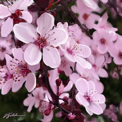 http://www.jkretschmer.com/pages/30in30.html Pink Blossoms by Jennifer Kretschmer