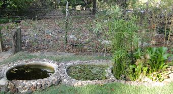 Projeto Baleia Jubarte . Filtro biológico para as águas cinza.