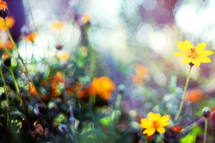 Gorgeous free-lensing photo!!!!!!!